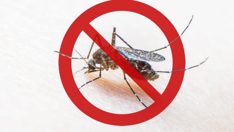 Fiebre del virus Mayaro: la nueva alerta